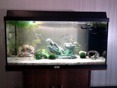 Des nouvelles de mon aquarium