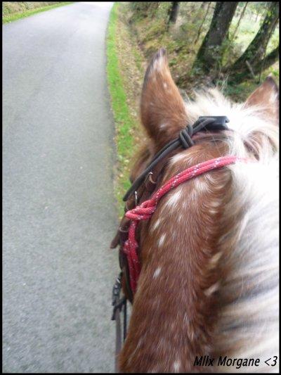Cce poney est genial !!!