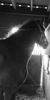 """""""Pour parler à un cheval, il n'y a pas besoin de mots. C'est une étreinte charnelle qui alimente nos rêves."""""""