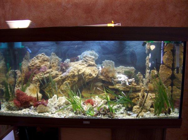 archives , l'aquarium eau de mer méditérranée - jeanluc83