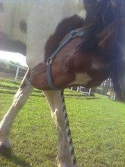 Beybey (l)  un amour de cheval, Le plus beau à mes yeux & le meilleur (l)