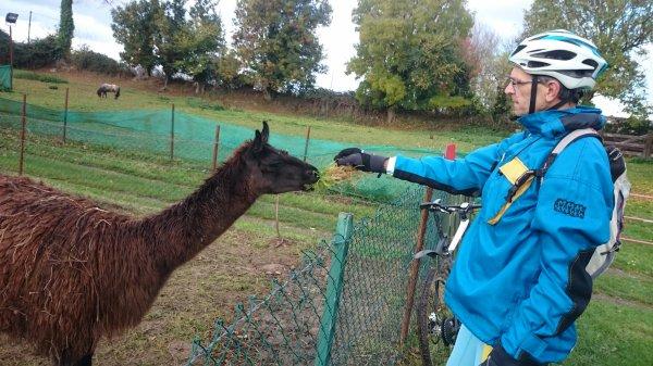 dimanche 6 novembre ( balisage ou visite d'un parc Zoologique)