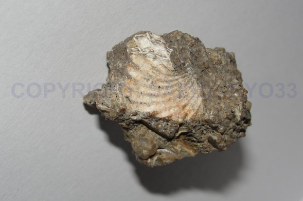 Les fossiles partie 4