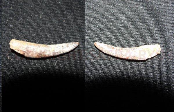 Les fossiles partie 8