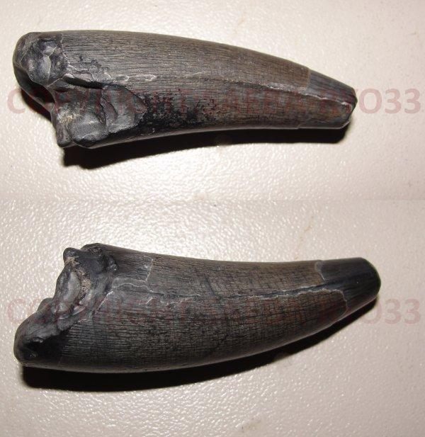 Les fossiles partie 9