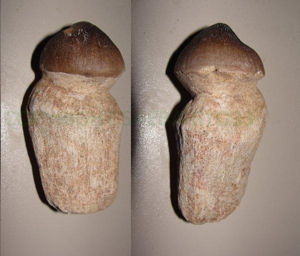 Les fossiles partie 10