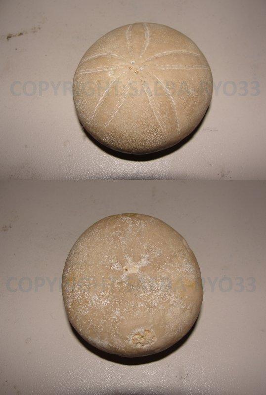 Les fossiles partie 5