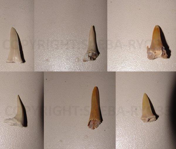 Les fossiles partie 6