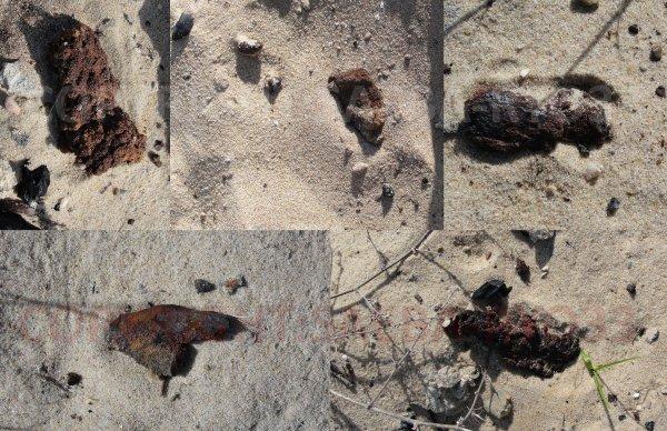 Campagne de détection au Cap Ferret partie 12