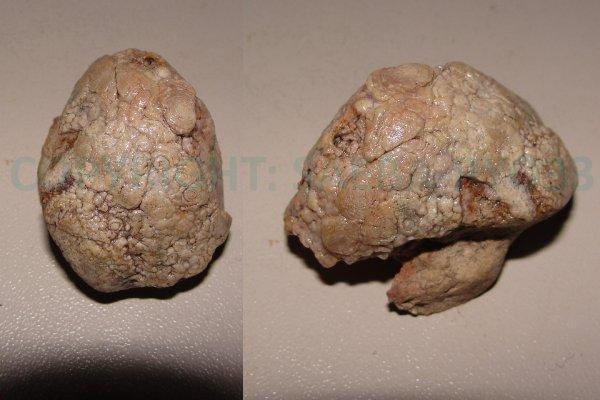 Les fossiles partie 11