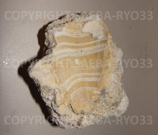 Les fossiles partie 12