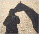Photo de Fabulous-ponies
