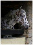 Photo de poneys-du-houssay