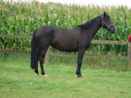 blog sur les image des chevaux, et des amoureux