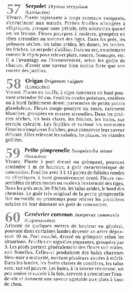 Plantes comestibles 1