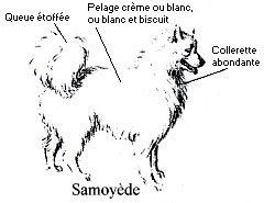 Les chiens polaires