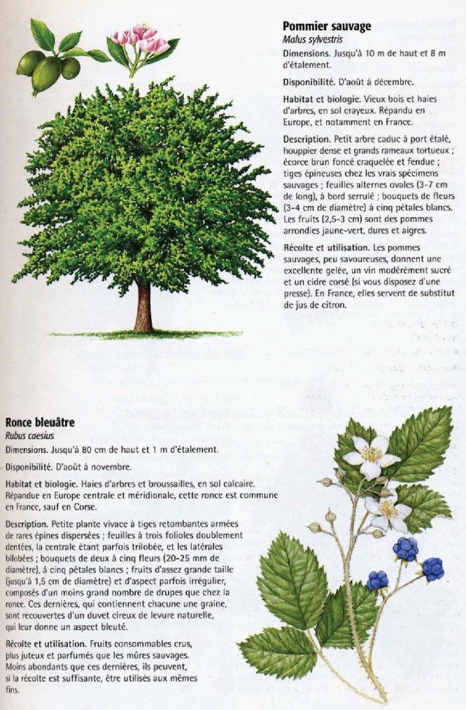 La nature comestible 2