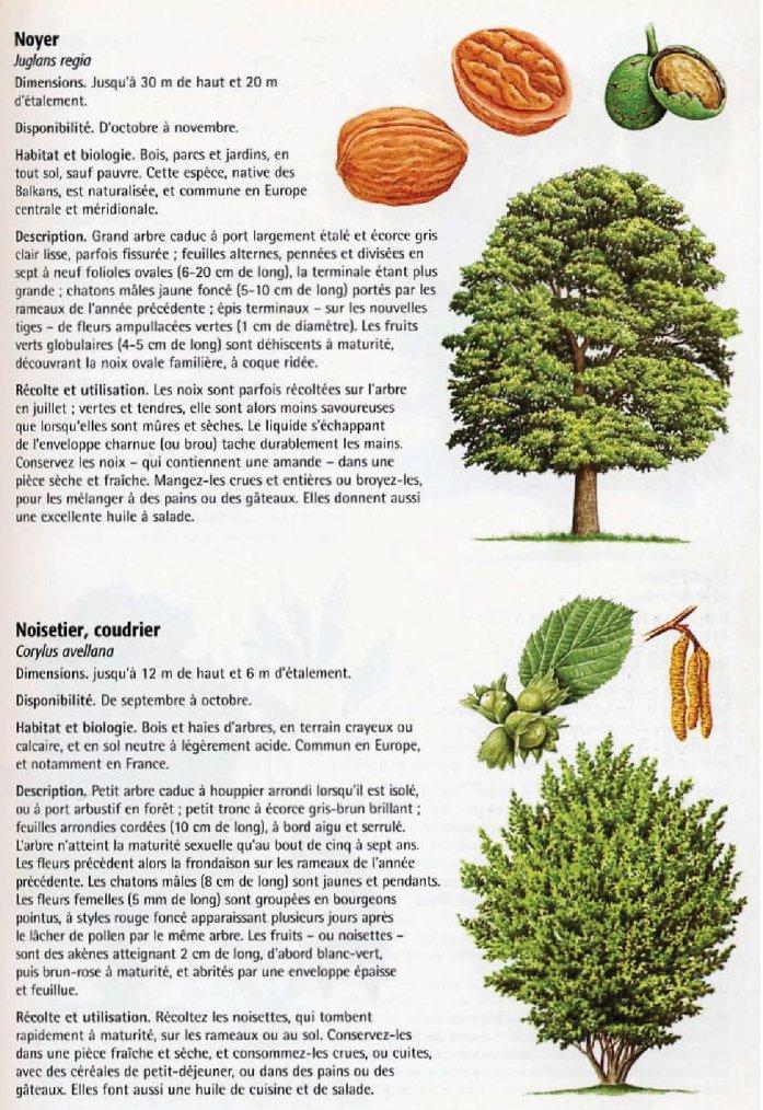La nature comestible 3