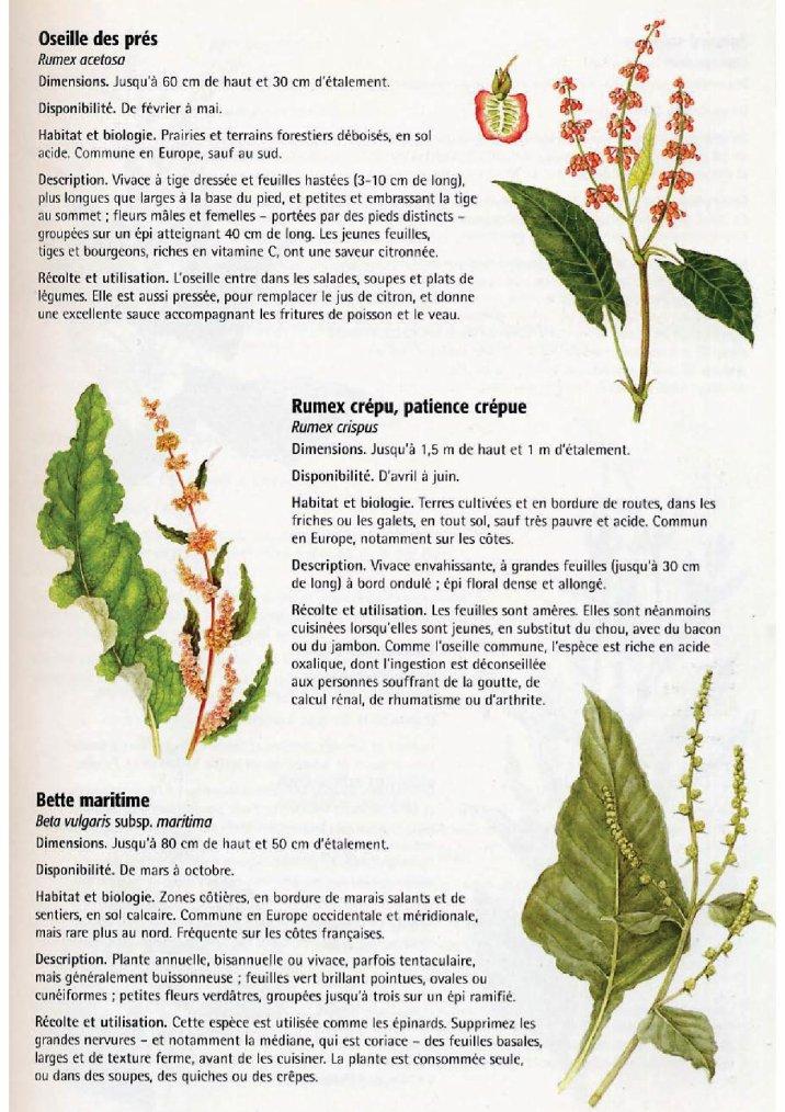 La nature comestible 5