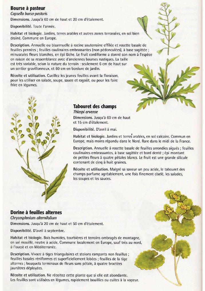 La nature comestible 6