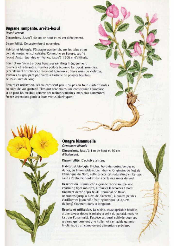 La nature comestible 9