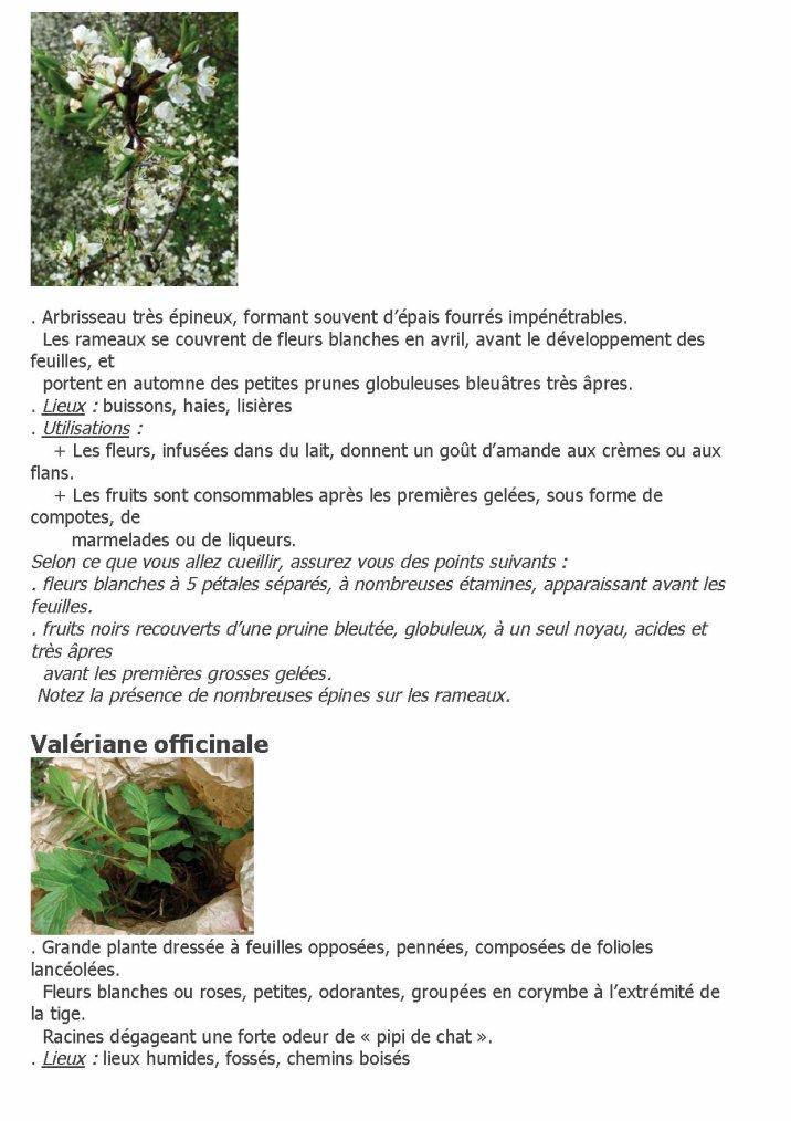 Plante sauvages comestibles et médicinales