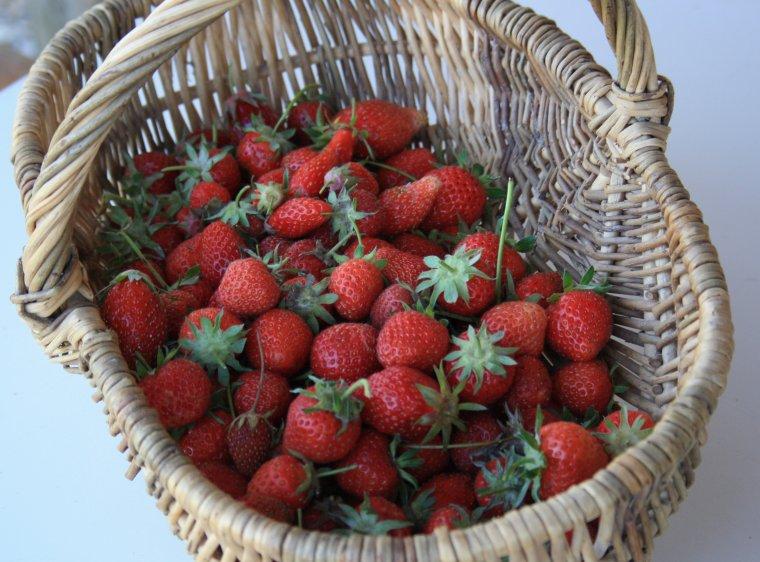 petite récolte de fraises