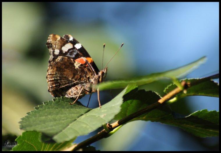 P'tit papillon!!