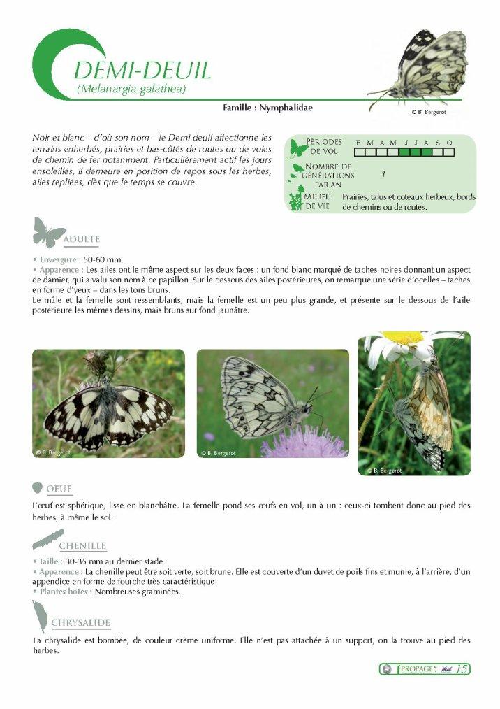 Reconnaitre les papillons...