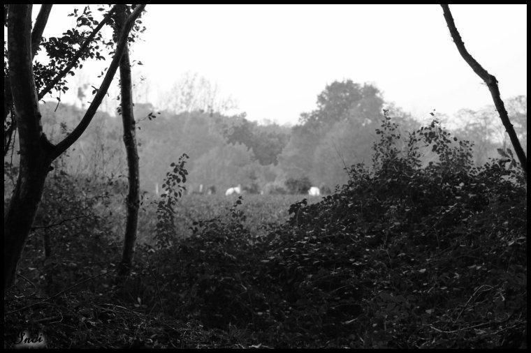 P'tit ballade en forêt...