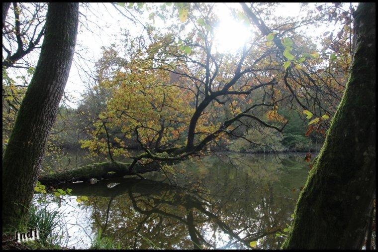Petite sortie en forêt...