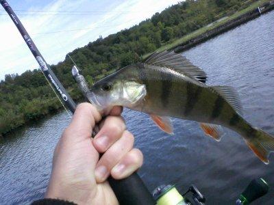 voilà ce que donne deux jours de pêche en canal!