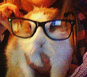 Mon Petit Lapin <3 .