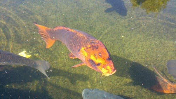 Aquarium du Bugue (Périgord, 24)