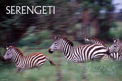 Parc National du Serengeti (Tanzanie)
