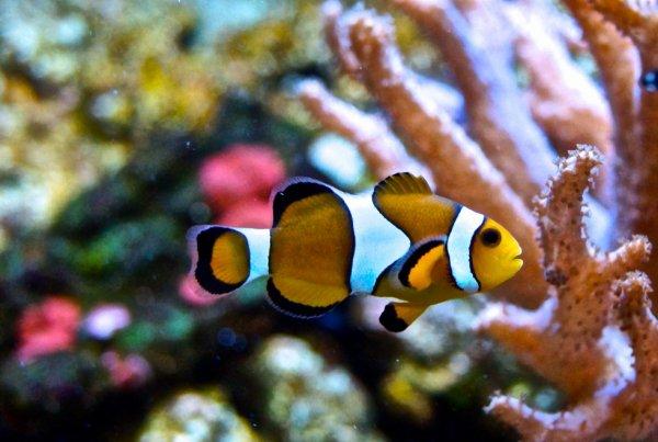 Aquarium Color .