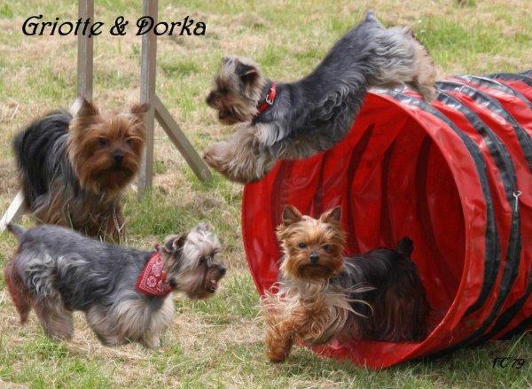 Dorka & Griotte