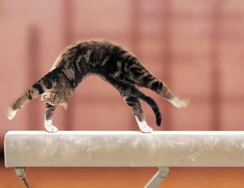 Gymnaste un jour, gymnaste toujours