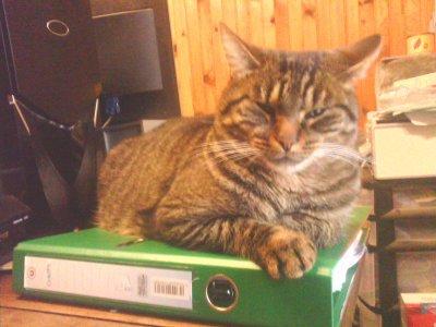 bucky qui fait sa sieste sur les papiers