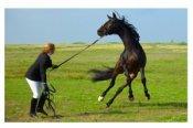 BIEN ÊTRE: Les signes du stresse chez le cheval.
