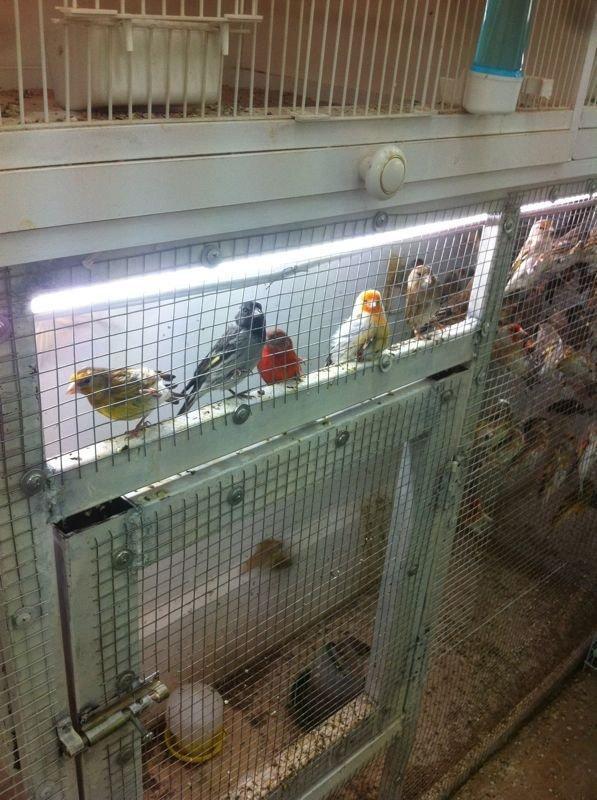 Hybirds