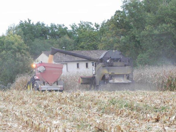 Moisson de maïs 2010
