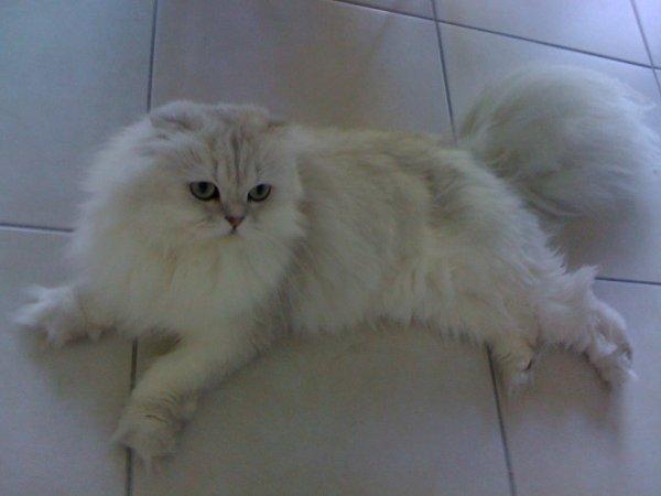 flocon ancien chaton de 2010 dans sa famille