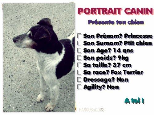 PORTRAIT CANIN