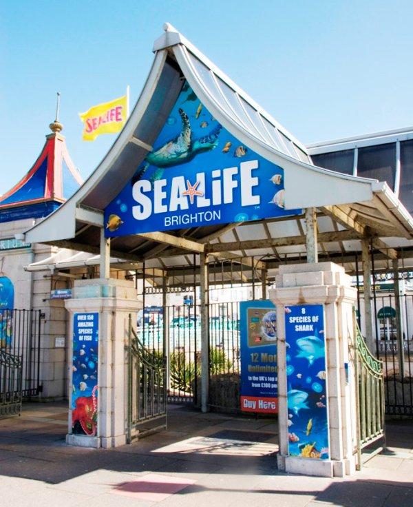 Brighton !! SEA LIFE CENTER !! <3