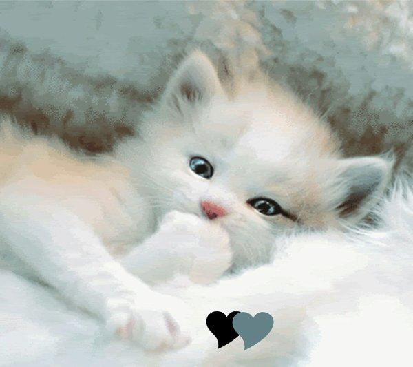 J aime les chats et vous...