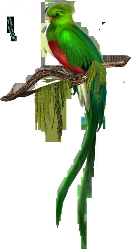 vola nouveau musique  de croisier sylvain (2015)