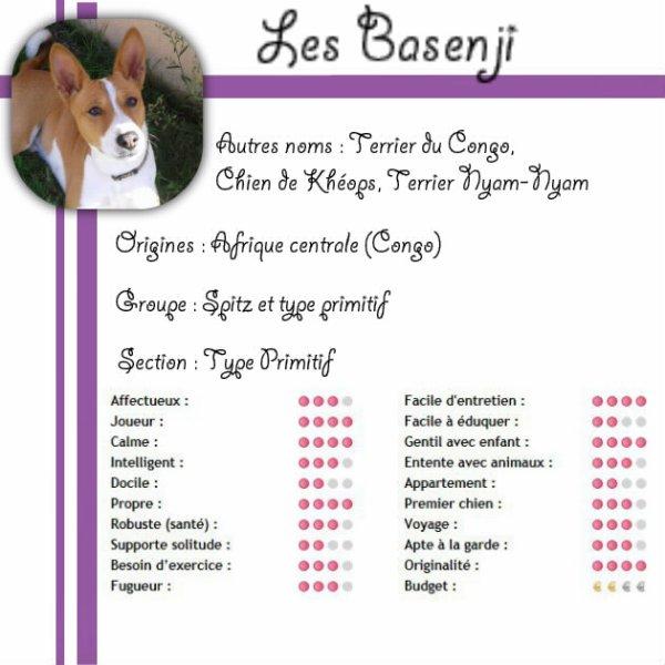 ~ Le Basenji ~