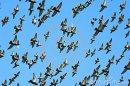 Photo de le-colombophile-du-62300