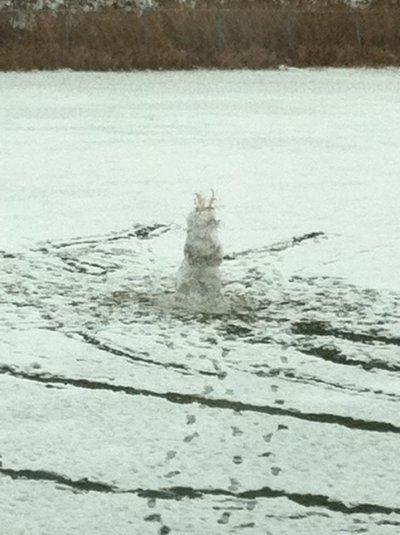 Deuxième Neige! Puis bonhomme de neige!
